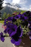Switzerland Mountain flowered view Stock Photo