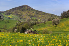 Switzerland. Panoramic view of beautiful mountain landscape iwith green mountain pastures with flowers and  mountains in the background in springtime Royalty Free Stock Photo
