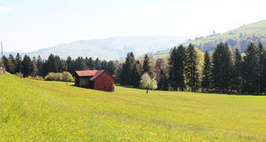 Switzerland in the summer. Beautiful Swiss landscape in the beginning of summer Stock Photography