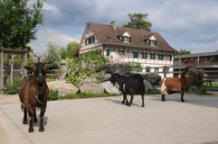 Switzerland: There are also many animals in the Swiss Epilepsy C. Enter in Zürich City Seefeld is a paradies for children stock photo