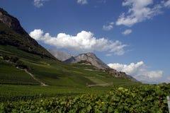 Switzerland, Valais, Saillon, the vineyard. Switzerland, Valais, Saillon, the village and vineyard stock photography