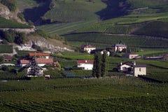 Switzerland, Valais, Saillon, the vineyard. Switzerland, Valais, Saillon, the village and vineyard stock photo