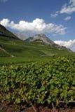 Switzerland, Valais, Saillon, the vineyard. Switzerland, Valais, Saillon, the village and vineyard stock images