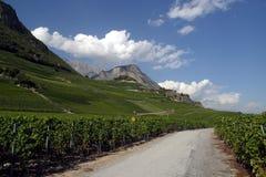 Switzerland, Valais, Saillon, the vineyard. Switzerland, Valais, Saillon, the village and vineyard royalty free stock photos