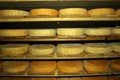 Switzerland, Valais, Visp village. Cheese factory.seasoning mountain cheese forms royalty free stock images
