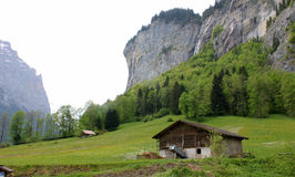 Switzerland village. This is a typical Switzerland village with house and meadow and trees Royalty Free Stock Image