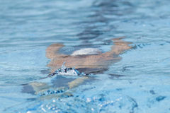 SWM: VärldsAquaticsmästerskap - qualific mäns 100m fjäril Arkivbild