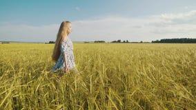 swobodny ruch Piękno romantyczna dziewczyna chodzi samotnie przez złotego pszenicznego pola wzruszających pszenicznych ucho i mło zbiory wideo