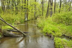 Stream flows through forest. Stock Photos