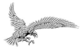 Swooping eagle vector illustration