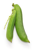 Sword beans Royalty Free Stock Images