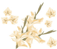 Sword lily gladiolus Stock Photography