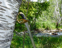 Sword. Old sword leaning to birch tree Royalty Free Stock Photo