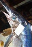 Swordfish Stock Photos