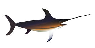 Swordfish Royalty Free Stock Photography