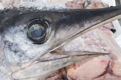 swordfish Fotografía de archivo
