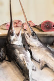 Swordfish in a fish market in Sicily Royalty Free Stock Photos