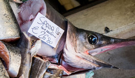 Swordfish Royalty Free Stock Photo