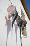 Swordfish heads Royalty Free Stock Photos