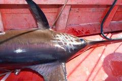 Swordfish stock photo