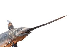 Swordfish in a museum Royalty Free Stock Photos