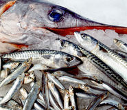 Swordfish and other small fishes Stock Photos