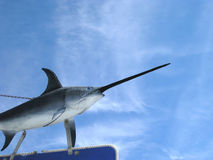 Swordfish in the sky. Swordfish above a sign at Catalina Island, California Royalty Free Stock Photo