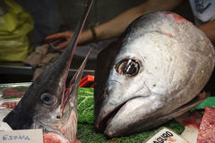 Swordfish and tuna head Stock Image