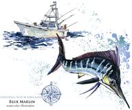 Swordfish. watercolor Marlin illustration. Atlantic fishing Stock Image