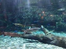 Swordfish zoo zdjęcie royalty free
