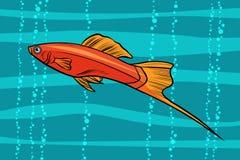 Swordtail aquarium fish. Pop art retro vector illustration Royalty Free Stock Photos