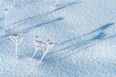 Swrface della neve Fotografie Stock
