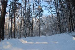 Syberian forest way stock photography