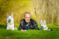 Syberyjscy husky i ich właściciel Obraz Stock
