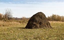 Syberyjska jesień Fotografia Stock