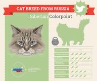 Syberyjski Colorpoint kota trakenu infographics ilustracja wektor