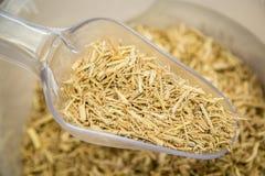 Syberyjski ginseng korzeń Fotografia Stock