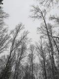 Syberyjski niekończący się niebo w matowości dni powszedni zdjęcia stock