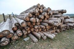 Syberyjskie Drewniane bele Obrazy Stock