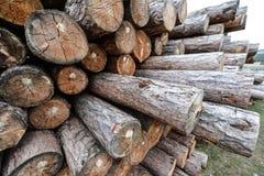 Syberyjskie Drewniane bele Obrazy Royalty Free