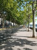 Sycamore δέντρα στοκ εικόνες
