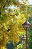 Sycamore. City landscape with autumnal plane trees Stock Photography