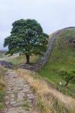 Sycamore Gap στο ρωμαϊκό τοίχο Northumberland, Αγγλία Στοκ Φωτογραφία