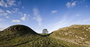 Sycamore Gap Royalty Free Stock Image