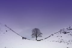 Sycamore Gap Stock Photos