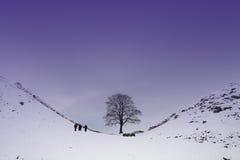 Sycamore Gap. On Hadrians Wall where Robin Hood was filmed Stock Photos