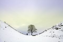 Sycamore Gap Stock Photo