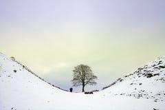 Sycamore Gap. On Hadrians Wall where Robin Hood was filmed Stock Photo