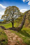 Sycamore Gap on Hadrian's Wall Stock Images