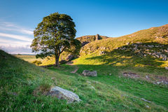 Sycamore Gap on Hadrian`s Wall Royalty Free Stock Image